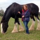 NFU Countryside Equine Champion of the UK The Story of Ted